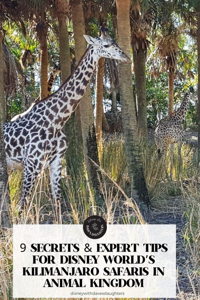 9 Secrets & Expert Tips for Kilimanjaro Safaris | Walt Disney World's Animal Kingdom