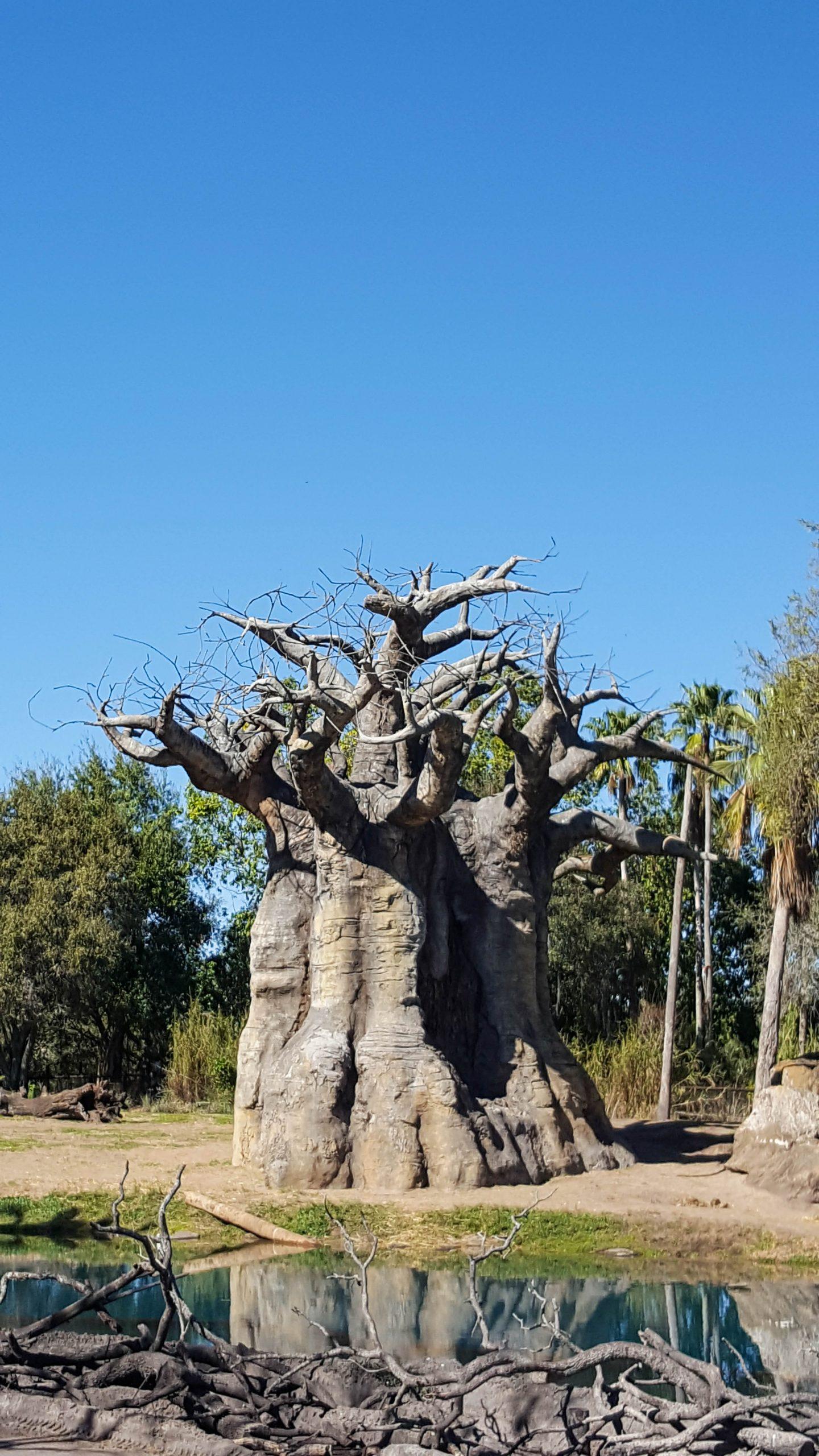 Tree at Animal Kingdom